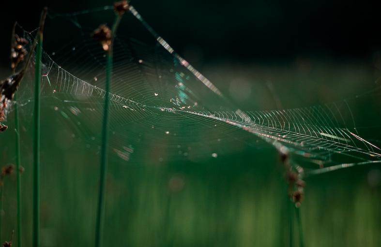 Web on a shore meadow