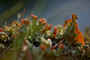 The march of the lichens